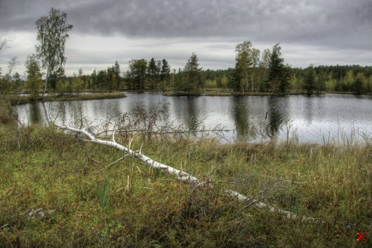 Синявинские болота - Россия